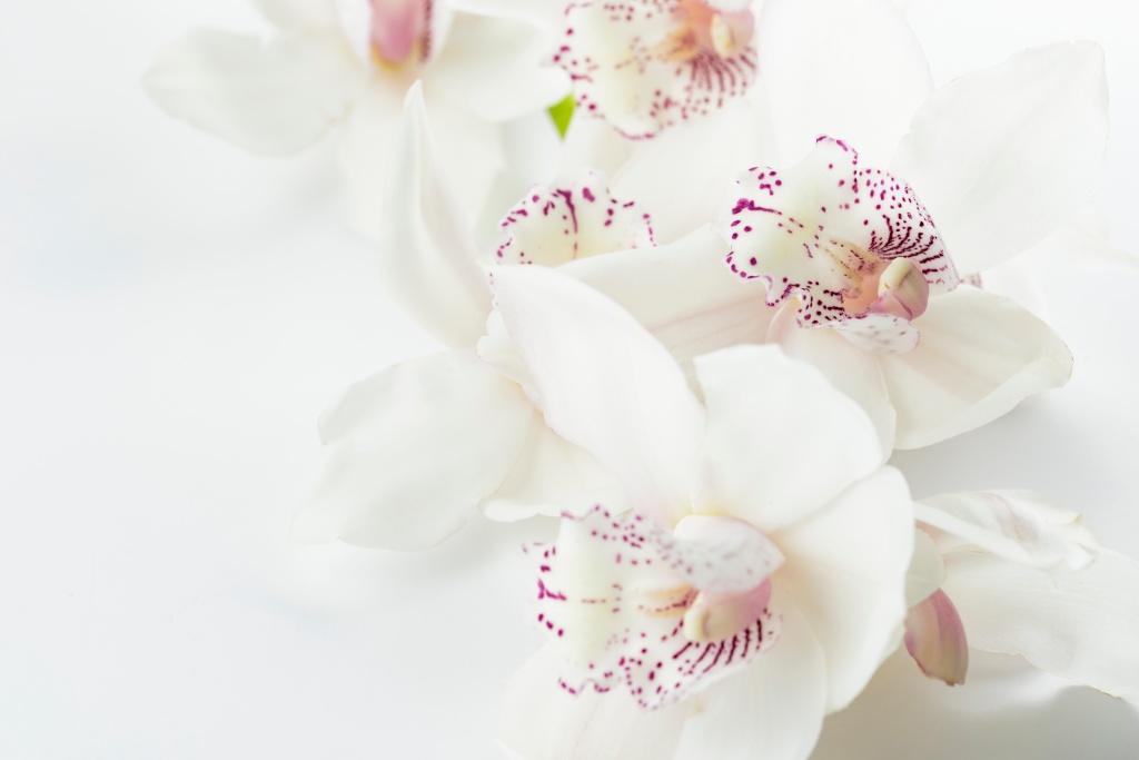 hvide-blomster